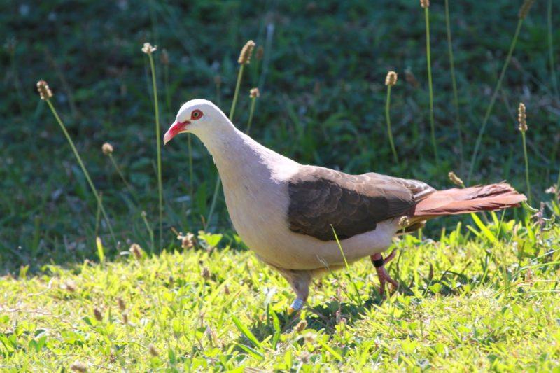 poze cu porumbei