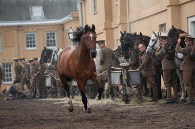 cele mai apreciate filme cu cai