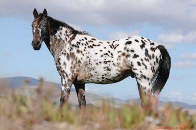 cei mai buni cai de calarie