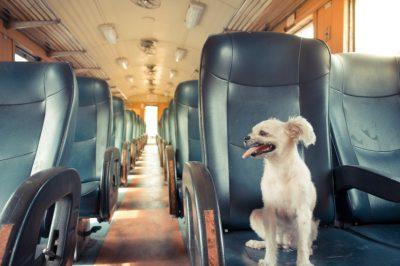 am voie cu cainele in tren
