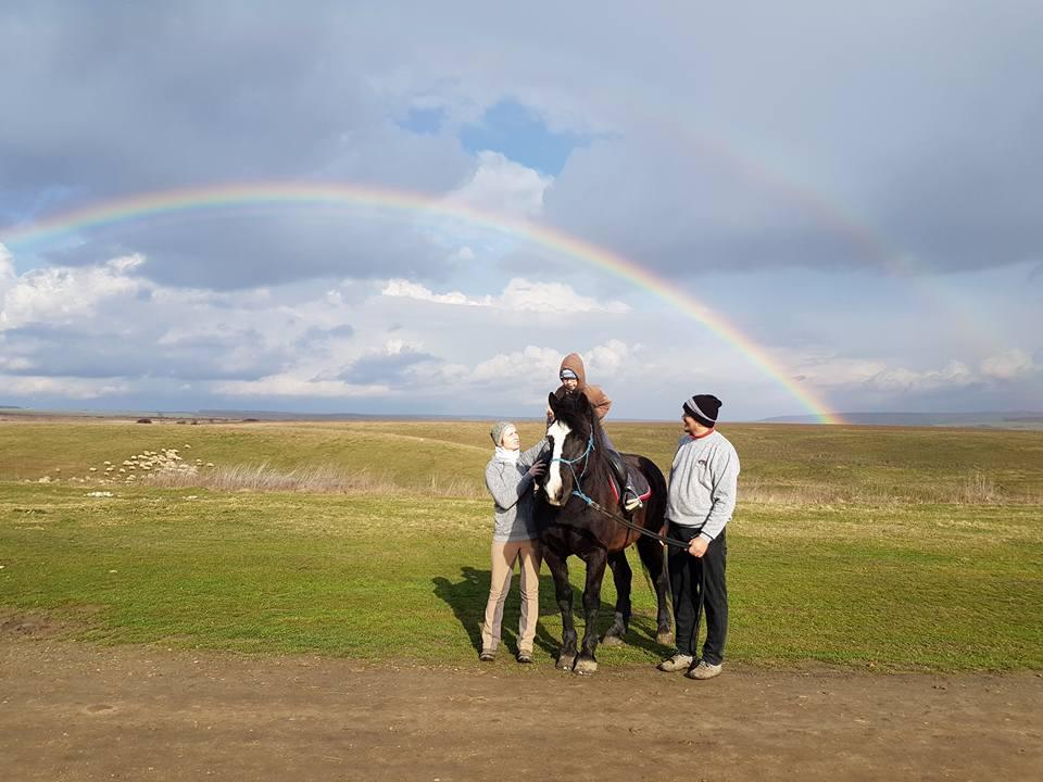 terapie asistată de cai 5