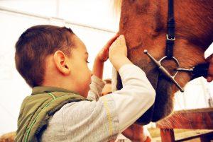 terapie asistată de cai 7