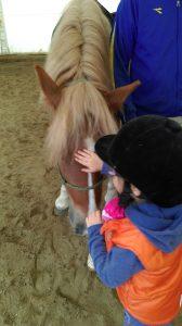 terapie asistată de cai 8