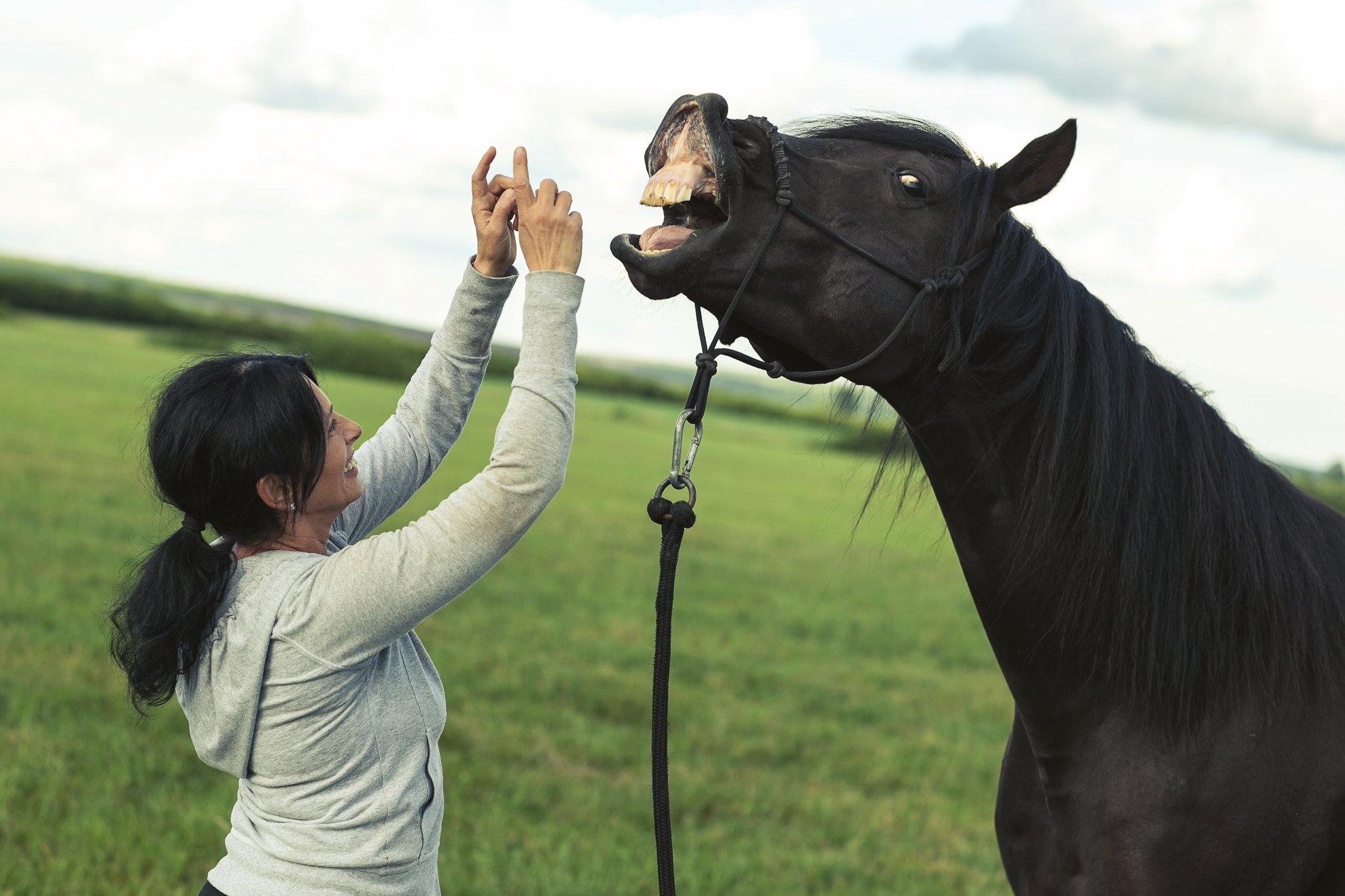terapie asistată de cai 6