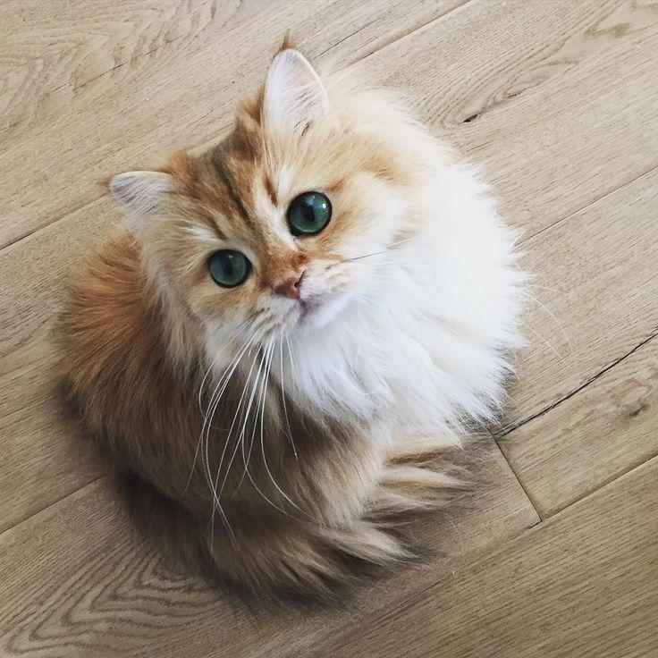 cea mai bună hrană pentru blana pisicii
